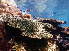 【Oita / Fukushima】 60 minutes snorkel experience! (Guide and equipment rental included)
