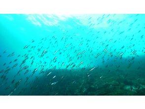 【Oita / Fukushima】 60 minutes snorkel experience! (Guide only)