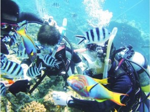 [Okinawa Kerama] Kerama Islands three around the point experience diving and snorkeling all day tour
