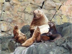 [北海道/小樽]赏春海狮&蓝洞巡游(80分钟)即使是小孩也可以享受!
