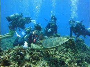 【沖縄・慶良間諸島】ライセンス無しでも1日中遊べる! ケラマ諸島体験ダイビング