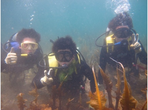 Also welcome beginners [Shimane Izumo] inexperienced person! Environmental preeminent, experience diving in the sea of the home of the gods Sanin! 【3 hours】の紹介画像