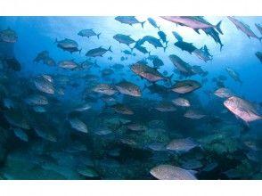 【屋久島 ダイビング】世界遺産の海で潜るボードダイビング!ライセンスお持ちの方が対象!初心者大歓迎!の画像