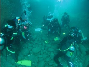 [Shimane Izumo] easily enjoy the large sea fish fan diving [boat diving]