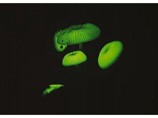 【東京・小笠原父島】夜の動植物を探索したり・天体の解説を聞いたりするナイトツアー