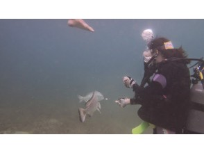 【兵庫・神戸】海の中の世界を知ろう!体験ダイビング~白浜・みなべ・白崎コース~(1日・昼食付き!)の画像