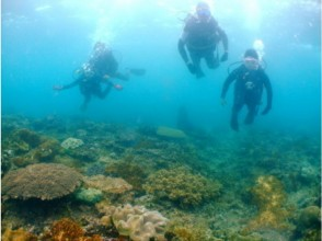 【沖縄・宜野湾】珊瑚や沈船が見れる! 宜野湾沖体験ダイビング&スノーケル