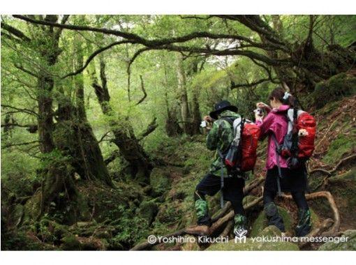 【鹿児島・屋久島】にフォトトレック@白谷雲水峡~プロカメラマンによるガイドで屋久島の風景を撮影!