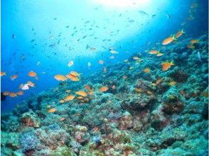 【沖縄・宜野湾】珊瑚や熱帯魚と一緒に泳ぐ! 宜野湾沖体験スノーケリング