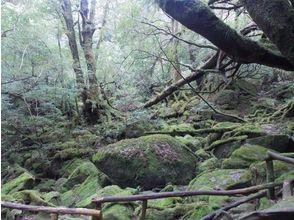 【鹿児島県・熊毛郡】断然お得!白谷雲水峡苔むす森トレッキングコース+島内観光