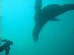 [北海道]海獅看潛水旅遊有限公司持有的2/11,17,24