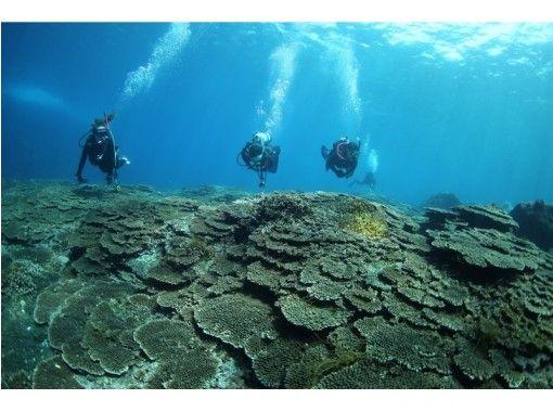 【東京 三宅島】サンゴ礁と温帯の生物が混在する豊かな海でファンダイビング
