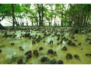 步行岛屿红树林漫步