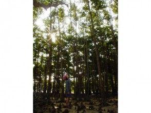 【沖縄県・屋我地島】幻想的!マングローブゆったり散策の画像