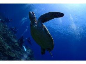 地域共通クーポン利用OK!【鹿児島・屋久島】本格的に屋久島の海を楽しもう!ファンダイビング(2ボートダイビング)