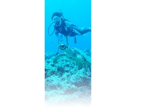 【鹿児島・屋久島】本格的に屋久島の海を楽しもう!ファンダイビング(2ボートダイビング)の画像