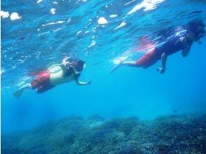 [沖繩石垣]珊瑚,熱帶魚,美麗的大海可以看!周圍浮潛當然石垣島