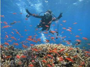 【沖縄・西表島】サンゴ礁広がる西表の海で初めての体験ダイビング【1ボート半日~】