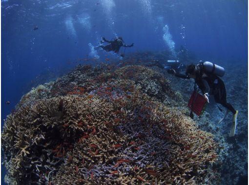 滿足[沖繩西表島]紅珊瑚產卵! ?夜清晨潛水の紹介画像