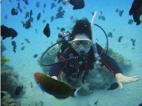 【鹿児島・奄美大島南部】大島海峡、加計呂麻島サンゴ礁体験ダイブ&シュノーケル,ヨットクル。1日コースの画像