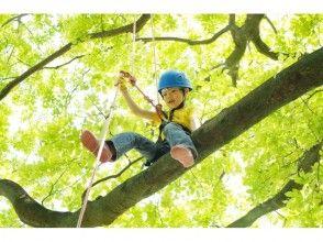 【沖縄・やんばるの森】木の上が好きな人は集まろう!ツリートレックツアー!!の画像