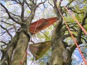 【滋賀・高島】ハンモックで森の時間を満喫する木登りツアー ツリーカフェ [VSC]