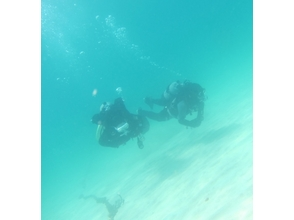 海的[Susaki]水族館享受!風扇深潛[1日]