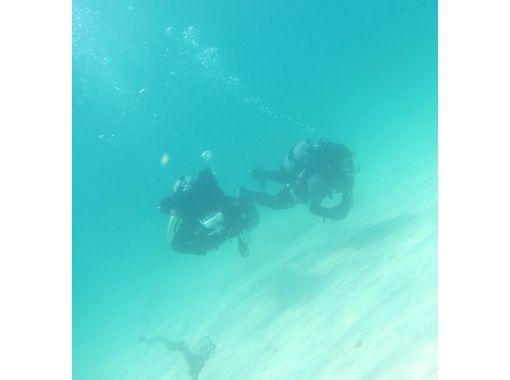 【須崎】海の水族館を満喫!ファンダイビング【1日】