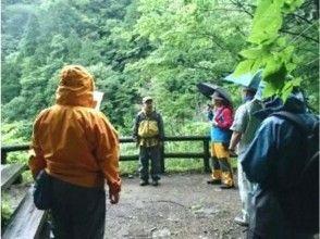 【鳥取・八頭郡】芦津の森林で心も体もリフレッシュしよう!森林セラピー体験(3時間:半日コース)の画像