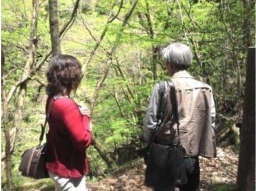 【鳥取・八頭郡智頭町】自然豊かな遊歩道と源流を歩いて癒されよう!森林セラピー体験(1日コース)の紹介画像