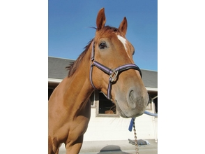 【静岡・御前崎】乗馬を始めたい方おすすめ!乗馬教室4回コースの画像