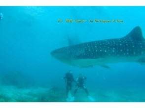 For license acquirers! Dive into the sea of the Izu peninsula with fan Diving! (2Dive) 【1Sun】