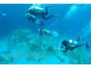 知識を身につけて海の世界をより楽しもう!オープンウォーターライセンス習得コース