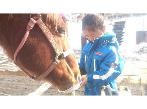 【山梨/山中湖】馬とのふれあい&引き馬体験プログラム(団体10名~30名)