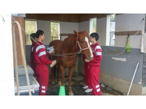 【山梨/山中湖】牧場の仕事体験&ふれあい乗馬プログラム(団体10名~20名)