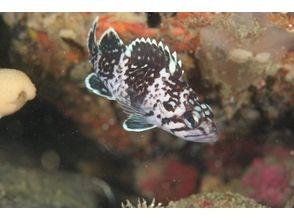 【宮城/石巻】自然あふれる石巻、女川 東北の海に楽しむ!の画像