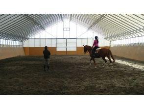 【北海道・30分】馬に触れ合いたい方へのお得プラン!体験乗馬!の画像