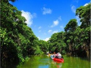 Water touring the woods of [Okinawa Okukubigawa] Okukubigawa mangrove! Kayak tour (★ There various discount ★)