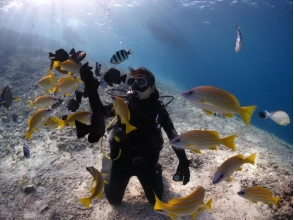 [Okinawa Churaumi] full charter system, Easy boat held! Churaumi experience diving (★ There various discount ★)