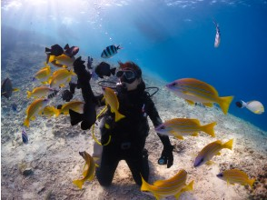 [Okinawa Onna Village] Churaumi experience Diving, easy boat holding! Charter system ♪ ★ Satisfied with beautiful shop enhancement facilities (with photo and movie shooting service)