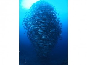【鹿児島・沖永良部島】ウミガメ天国=沖永良部島で体験ダイビング!