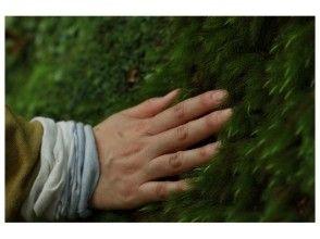 【鹿児島・屋久島】感性を研ぎ澄ます1日!フォトトレッキングの画像