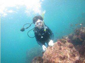 【静岡・東伊豆・富戸】まずはお試し!体験ダイビング2ビーチ☆地域共通クーポン利用可能プラン