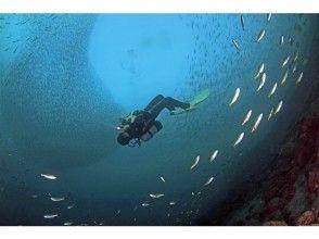 [Shizuoka Izu / Numazu] enjoy the creature of a wide variety of sea! Fan dive guide pack (two dives)