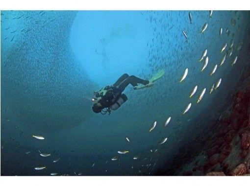 【静岡・伊豆/沼津】多種多様な海の生き物を堪能! ファンダイブガイドパック(2ダイブ)