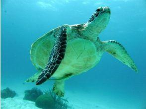 [Okinawa Ishigaki Island] enjoy the Yaeyama of the sea! Fan diving (1 day course: 2DIVE or 3DIVE)