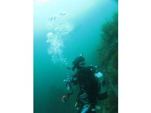 [ 新泻 · 佐渡岛]让我们体验佐渡海的世界!体验深潜 (2小时)
