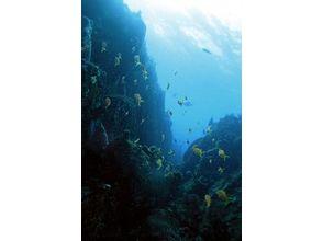 【静岡・伊豆】ダイビングとサカナ好き集まれ!海洋公園でダイビング【ファンダイビング】の画像