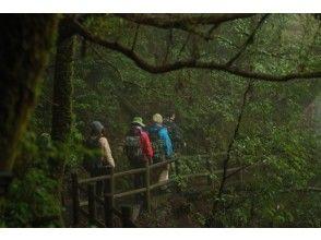 【鹿児島・屋久島】壮大なヤクスギ林・トレッキングコースの画像