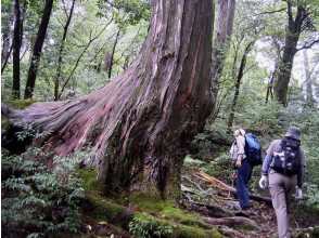 Recommended trekking course of [Kagoshima Yakushima] Yakushima fan-friendly